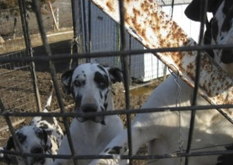 "This photo shows ""Okie"" (left), ""Jenny"" (middle) and ""Foot"" (right) at Debra Pratt's dog breeding facility during a March 26, 2013, USDA Animal and Plant Health Inspection Service inspection."