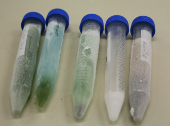 Test tubes on August 2, 2015 show samples from (left to right) Lake Wapello, Black Hawk Lake, Kent Park Lake, Green Valley Lake and Brushy Creek Lake after processing. The blue and green sample from Black Hawk and the clear sample Green Valley tested above the health advisory levels for microcystin. Kent Park's levels were elevated, at 12.5 micrograms per liter, but didn't require an advisory.