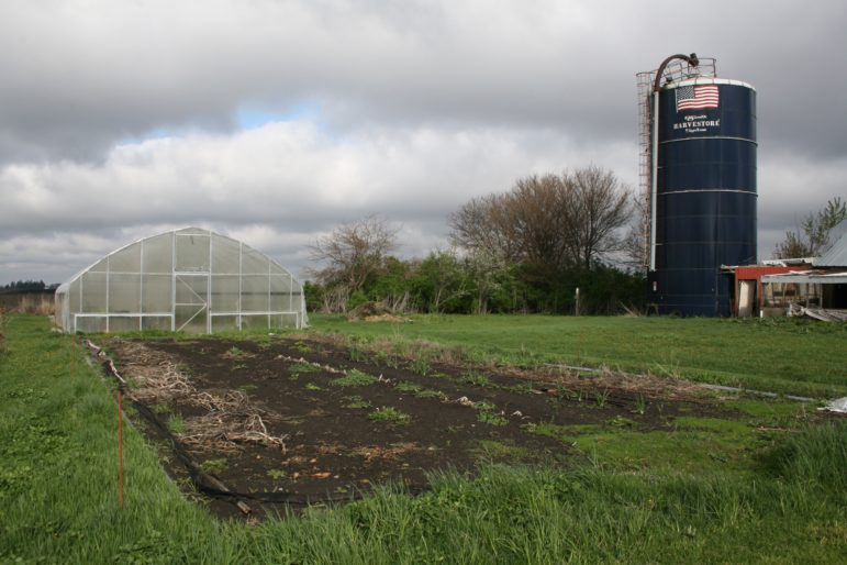 Using a high tunnel allows Rob Faux to extend his growing season, but it was also in the path of the spray in 2012 when an airplane accidentally dumped pesticides on his organic crops. The crops had to be destroyed and the fields and the produce in them couldn't be re-certified as organic for three years, in 2015. This photo was taken April 29, 2016.